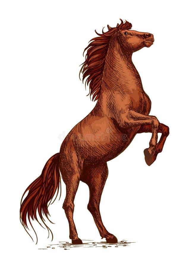 Одичалый аравийский жеребец лошади свирепствуя и поднимая иллюстрация вектора