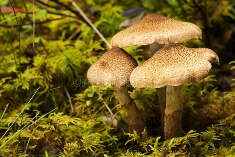 Одичалый гриб стоковые изображения rf