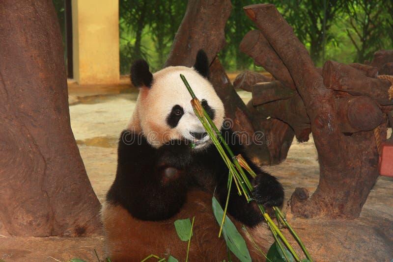 одичалый зоопарк в Гуанчжоу, Гуандуне, фарфоре стоковые фотографии rf