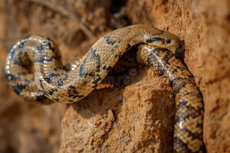 Одичалый конец змейки вверх в среду обитания природы стоковое фото rf