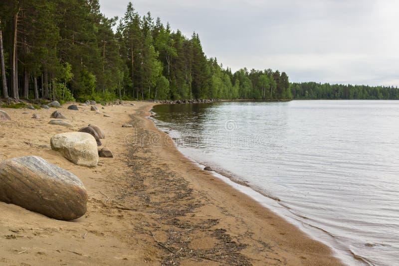 Одичалый северный пляж озера леса стоковые фотографии rf