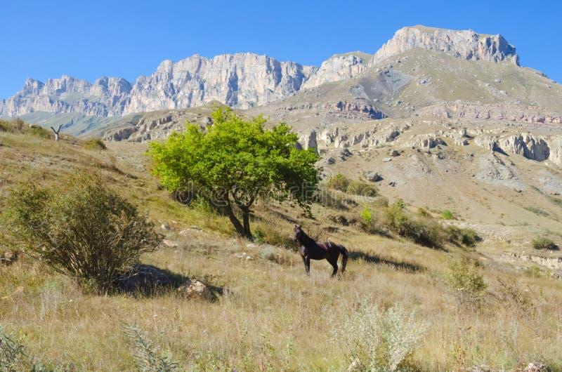 Одна лошадь на предпосылке каньона стоковые фото