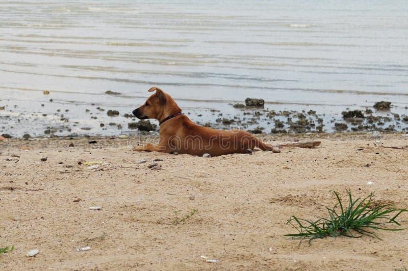Одна собака на пляже стоковое фото