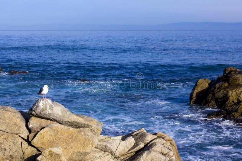 Одна чайка на утесе, привод 17 миль стоковое изображение