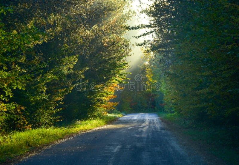Одноточечная перспектива вниз с узкой дороги полесья Туманное вершин дерев полесье в ярком солнечном свете, тенистом дереве & лес стоковая фотография