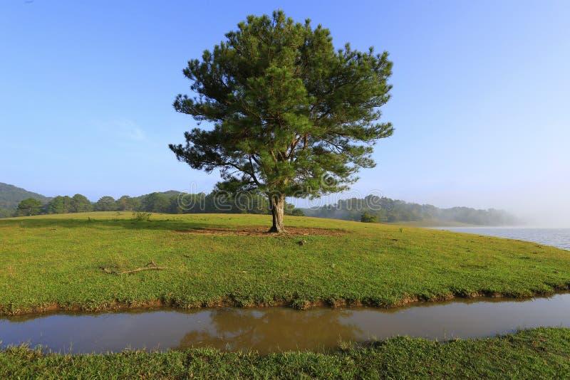 Одно дерево в озере стоковые изображения rf