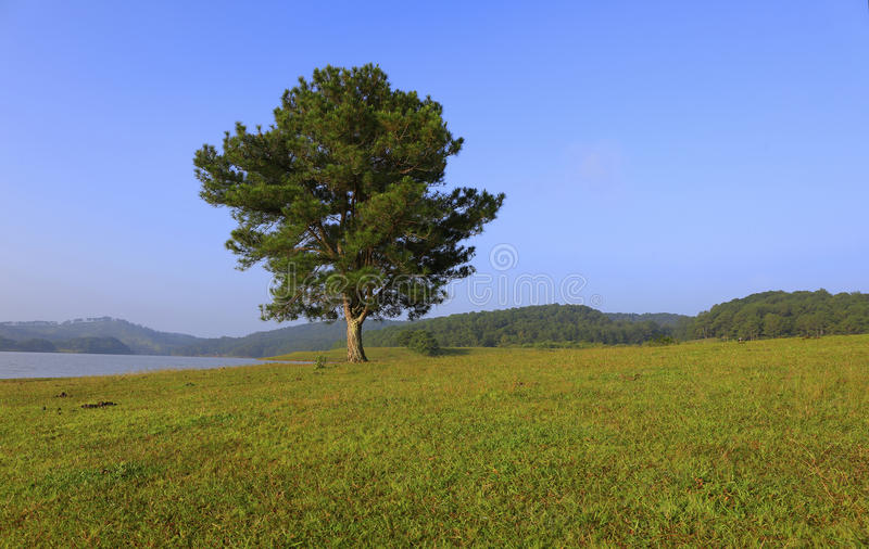 Одно дерево в озере стоковое фото rf