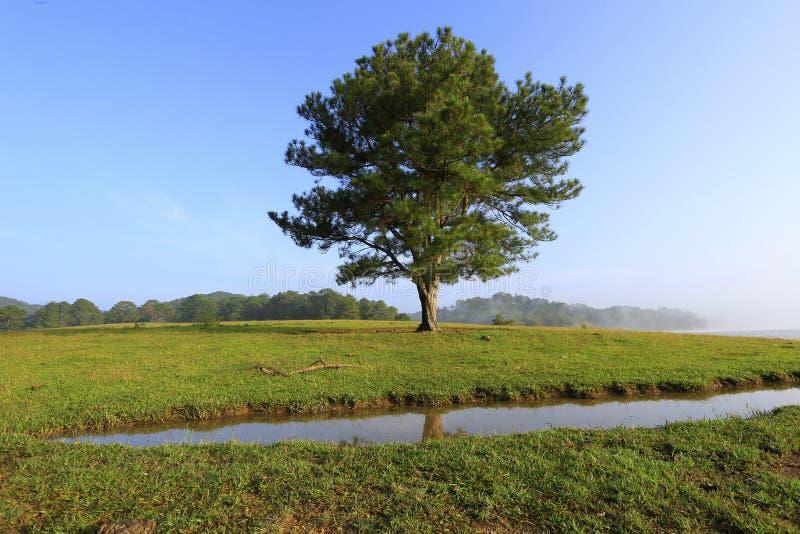 Одно дерево в озере стоковое изображение