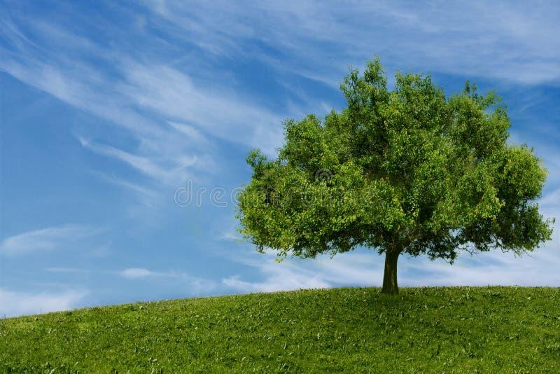 Одно дерево в поле стоковое изображение