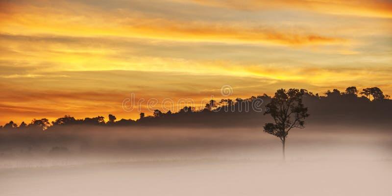 Одно дерево в утре стоковые изображения