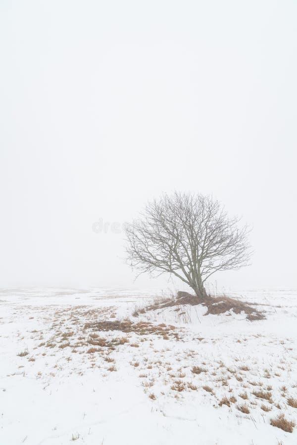 Одно дерево на туманном поле зимы. стоковое фото rf