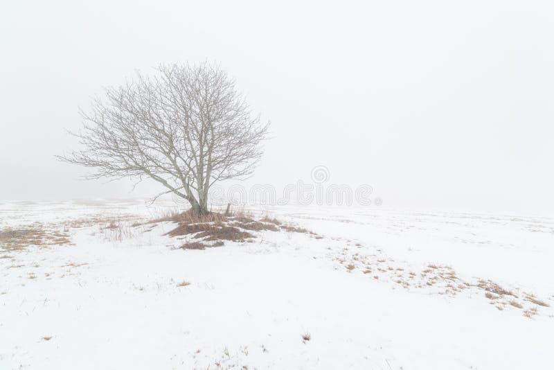 Одно дерево на туманном поле зимы. стоковая фотография