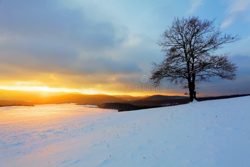Одно дерево на луге на заходе солнца на зиме стоковое изображение rf