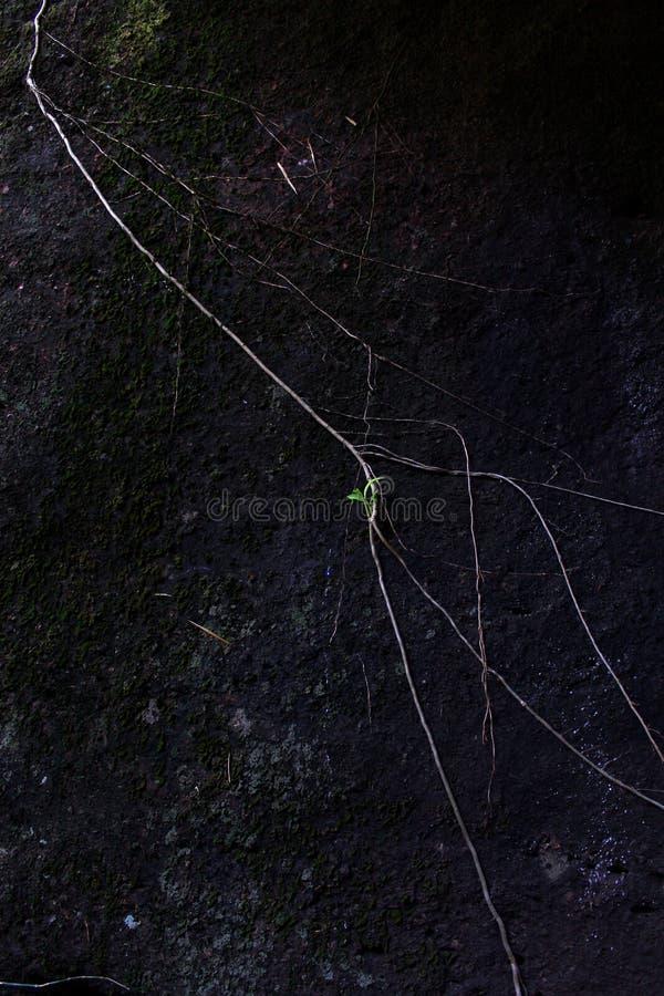 Одно меньшее дерево на большом камне стоковые фотографии rf