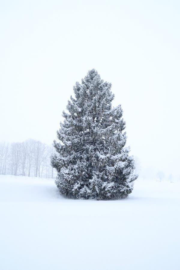 Одно снежное дерево стоковая фотография