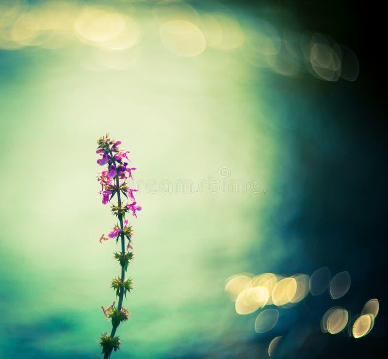 Одно цветок и bokeh стоковое фото