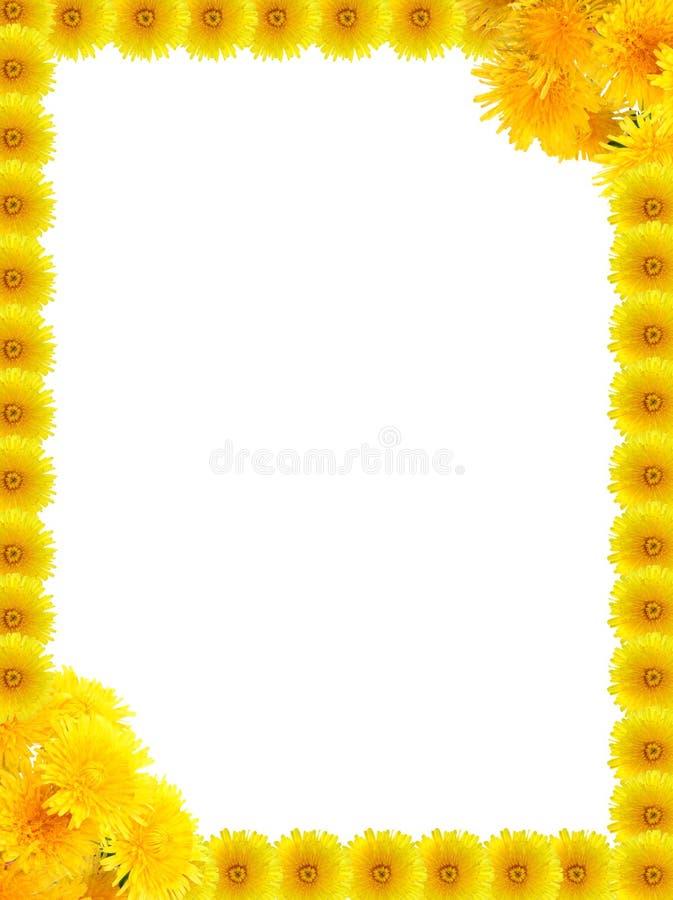 одуванчики опорожняют рамку внутри желтого цвета стоковое фото