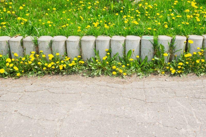 Одуванчик цветет барьер стоковые фото