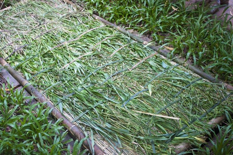 Олух - ловушка стоковая фотография rf