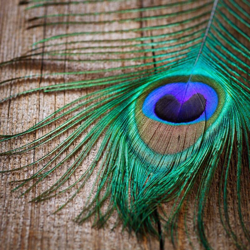 павлины пера доски деревянные стоковая фотография