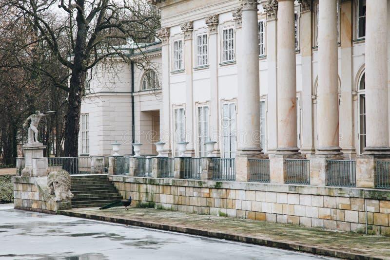 Павлин в Lazienki или королевские ванны паркуют в Варшаве в Польше стоковое фото