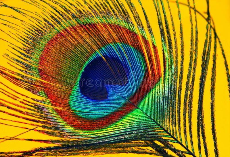 павлин пера глаза стоковая фотография rf