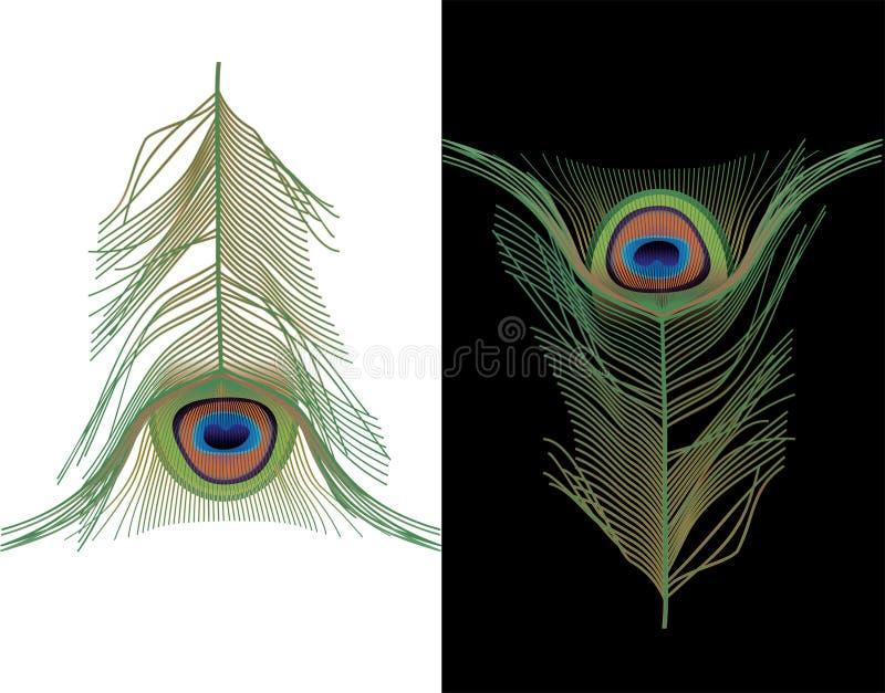 павлин пера иллюстрация вектора