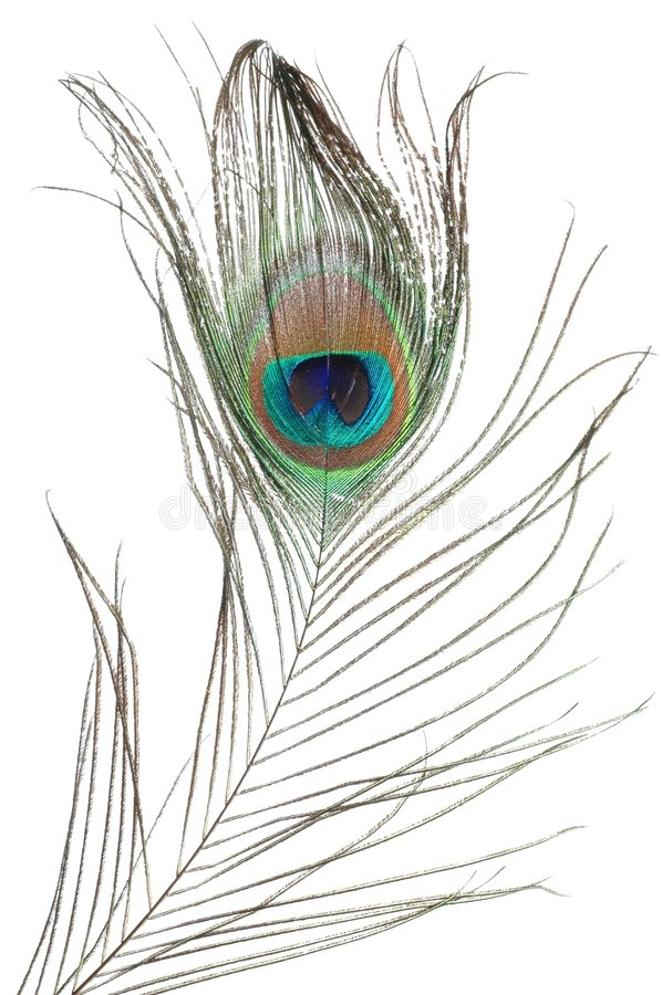 павлин пера