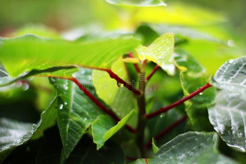 падает дождь листва стоковые изображения