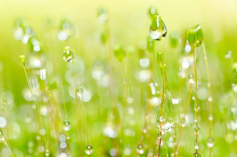 падает свежая зеленая вода природы мха стоковая фотография