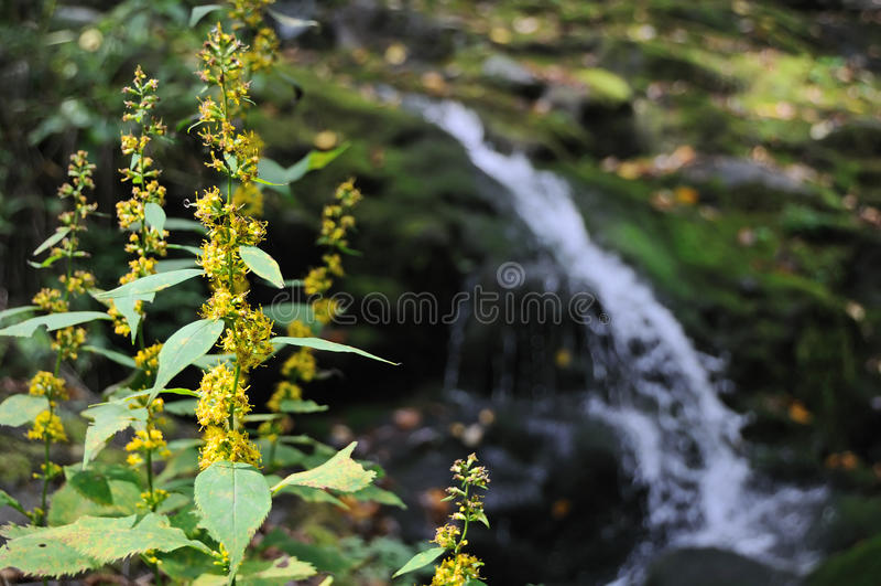 падает piney река стоковая фотография