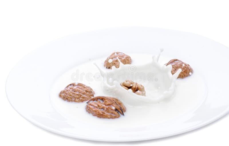 Падать Брайна чокнутый в шар с молоком Изолированное фото на белой предпосылке Падение молока замороженное время стоковые фотографии rf