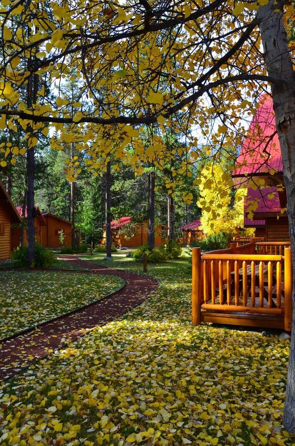 Падая листья деревьев с бревенчатыми хижинами стоковое фото