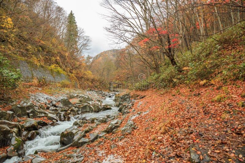 Падая листья с естественным потоком в осени в долине Nakatsugawa - Yama, Фукусима, Японии стоковая фотография rf