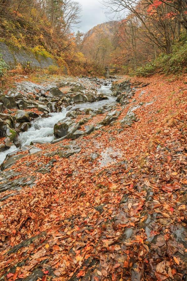Падая листья с естественным потоком в осени в долине Nakatsugawa - Yama, Фукусима, Японии стоковые фотографии rf
