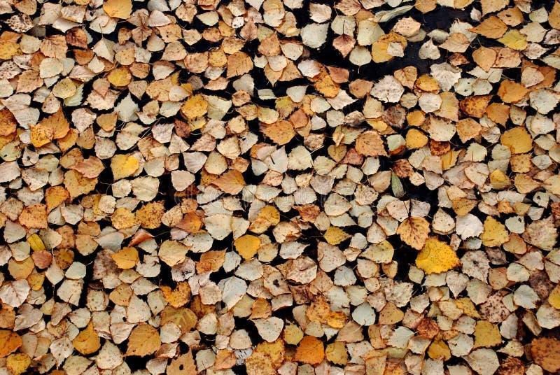 падая листья стоковое фото