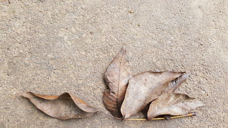 Падение Брауна выходит дерева грецкого ореха на влажную серую предпосылку пола цемента стоковая фотография rf