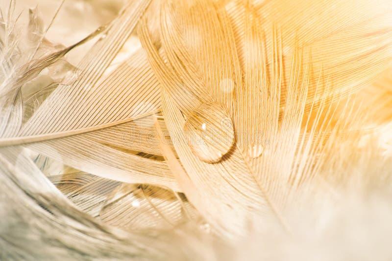 Падение воды на пере в цвете золота, фото макроса стоковые изображения rf