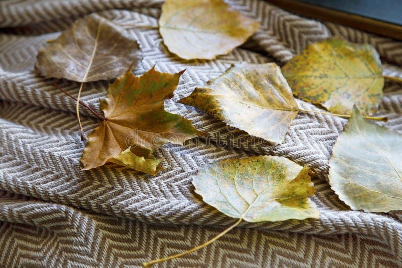Падение высушило листья на одеяле стоковая фотография