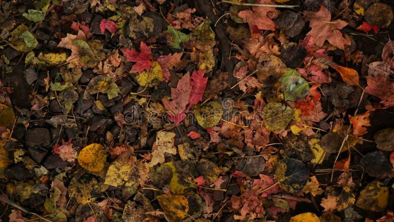падение выходит естественная текстура живой стоковая фотография rf
