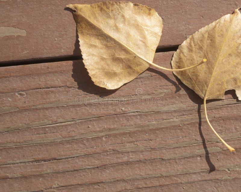 Падение выходит на выдержанное деревянное крылечко стоковые фотографии rf