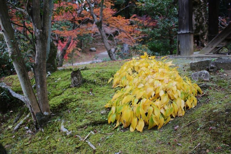 падение в резидентов положения виска Konkai Komyoji стоковые изображения rf