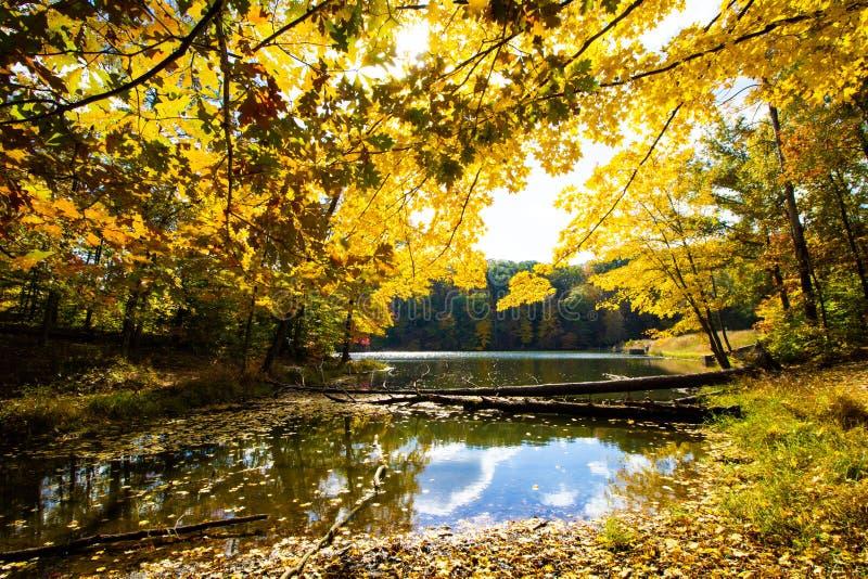 Падение дальше строит глазки парк штата озеро, Brown County, Индиана стоковые фотографии rf