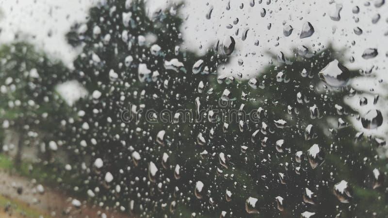 Падение дождевой воды природы стоковая фотография rf