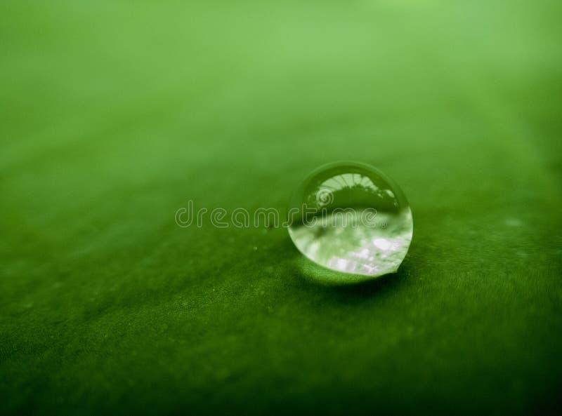 Падение дождя на лист лотоса стоковое фото