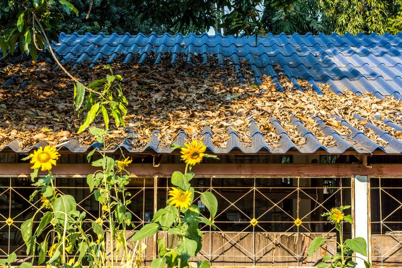 Падение листьев на крышу в школе стоковые фотографии rf