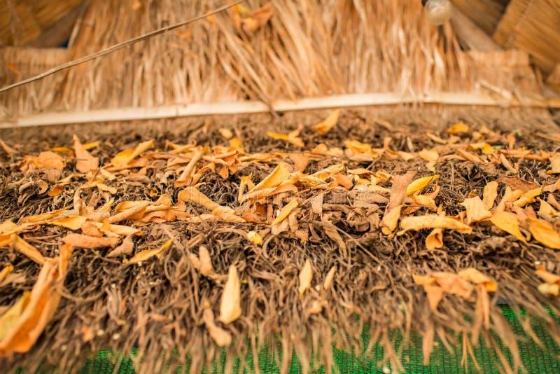 Падение листьев на крышу стоковое фото