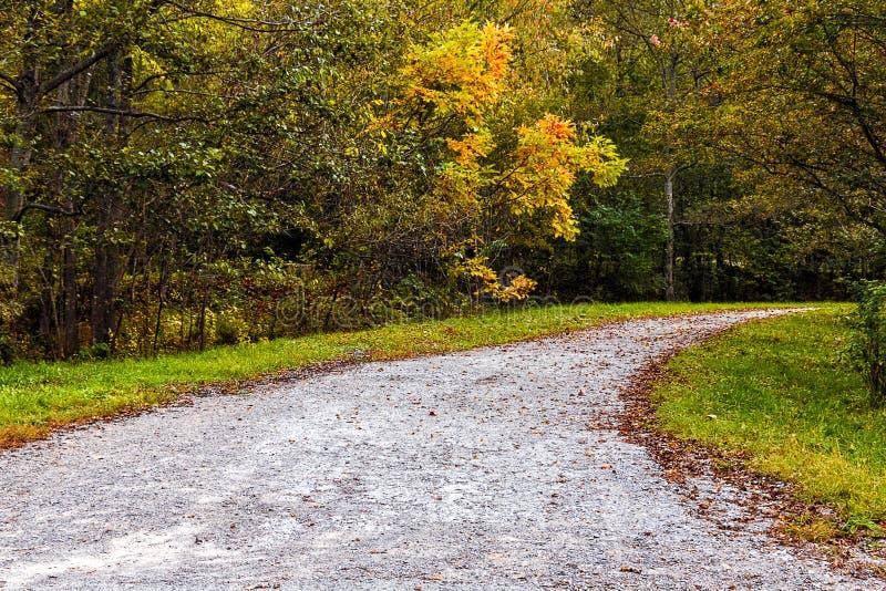 Падение лист осени в парк стоковое изображение