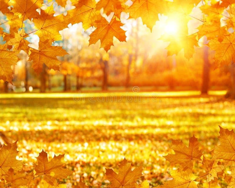 Падение, осень, выходит предпосылка Ветвь дерева с листьями осени клена на запачканной предпосылке Ландшафт в сезоне осени стоковая фотография rf