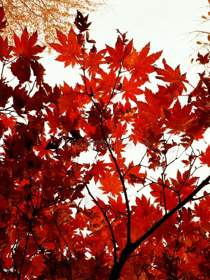 Падение, осень стоковое фото rf